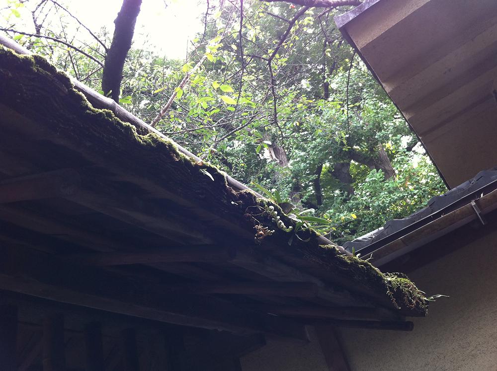 「上野公園に佇む、『韻松亭』」 Dhdaily